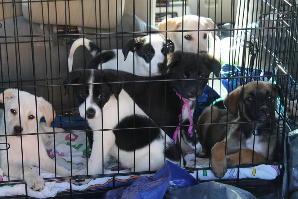 mix_of_puppies_being_transported